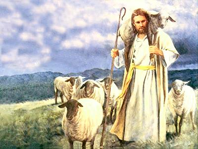 Be a Shepherd